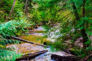 mckay-creek-5927.jpg